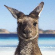 澳大利亞旅遊局