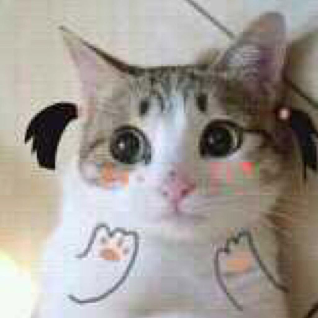 猫哦哟哟表情包分享展示