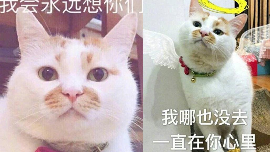 壁纸 动物 猫 猫咪 小猫 桌面 1028_578
