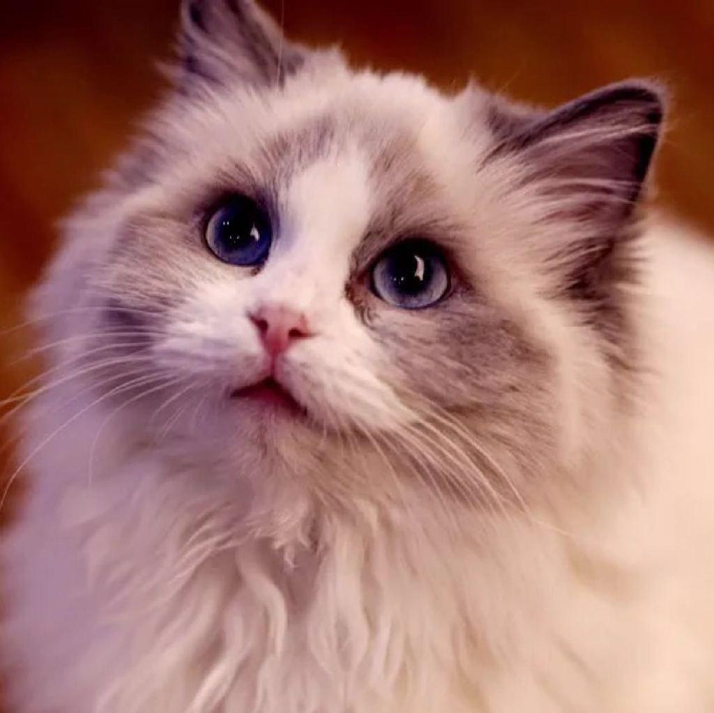 壁纸 动物 猫 猫咪 小猫 桌面 1024_1023