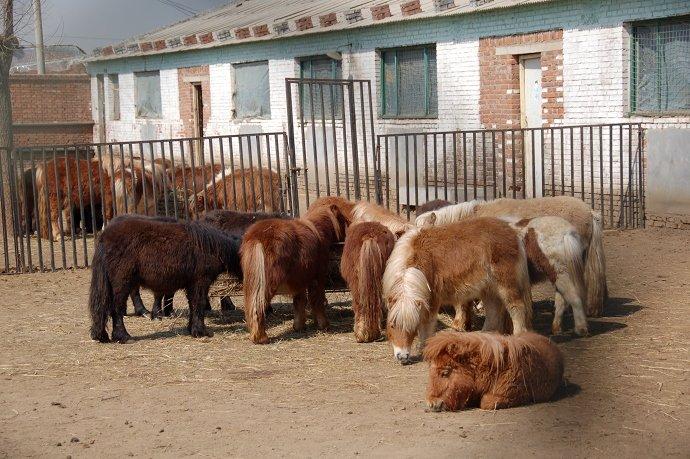 瑞尔动物庄园