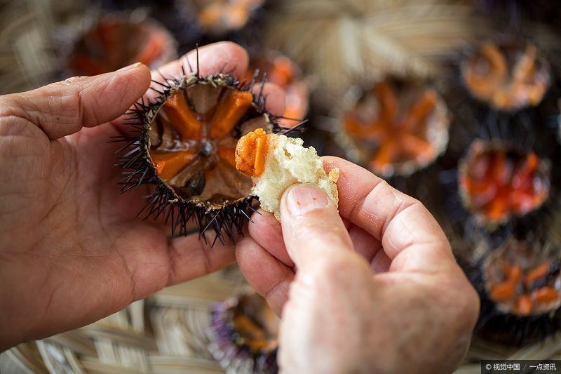 """5种顶级海鲜,第3种是""""毒物""""生吃却美味,只有胆大的敢尝试!"""