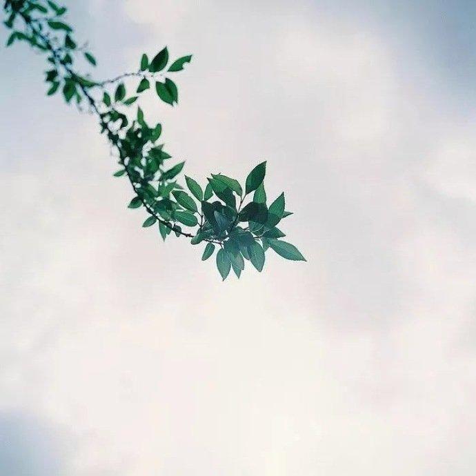 早安心语好句190902:喜欢是一朝一夕,爱是从心动到古稀