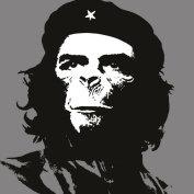 IT观察猿