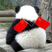 天才小熊猫微博照片