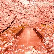 行走与日本