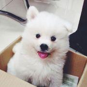 kinki_yu,发布寻狗启示热爱宠物狗狗,希望流浪狗回家的狗主人。