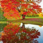 泰山枯溪微博照片