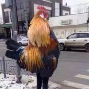 鸡大尾巴大微博照片