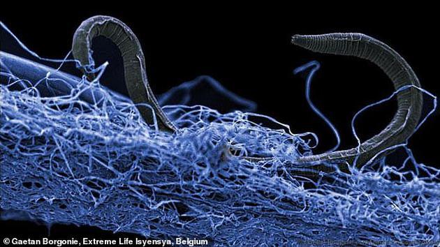 地下深处发现庞大生态系统:有以僵尸状态存活的细菌的照片 - 1