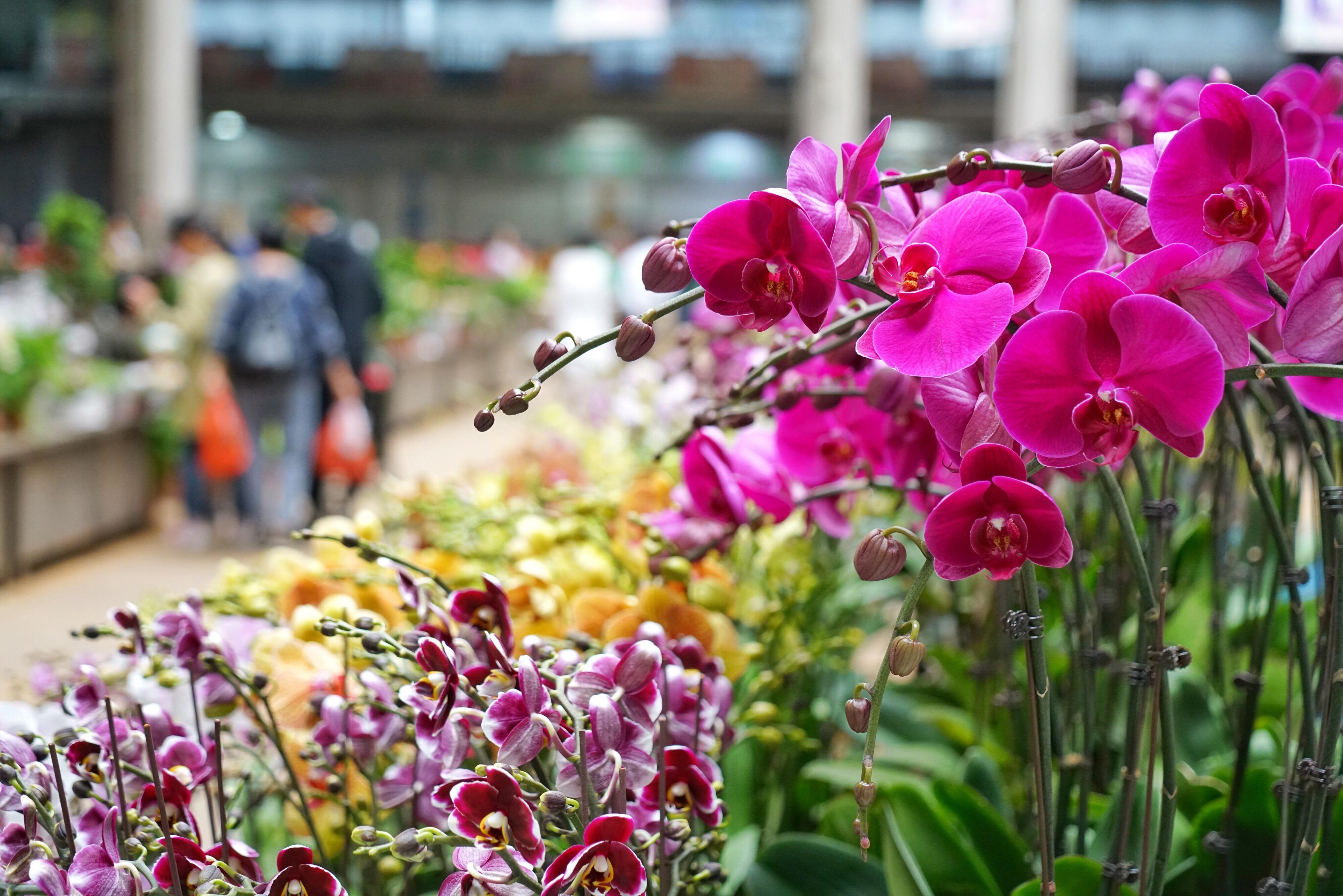 云南丽江玉龙雪山冰川公园,冰川公园日游客量限制在1万人