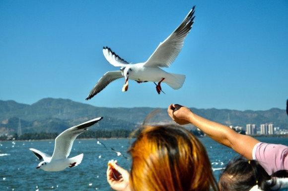 大理丽江泸沽湖旅游攻略路线-如何规划香格里拉,大理,丽江,Lu沽湖的旅