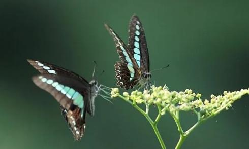 《蝴蝶》的遐想!