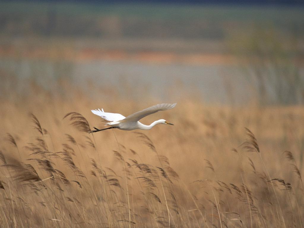 千姿百态的鸟类动物嬉戏场景精美图片