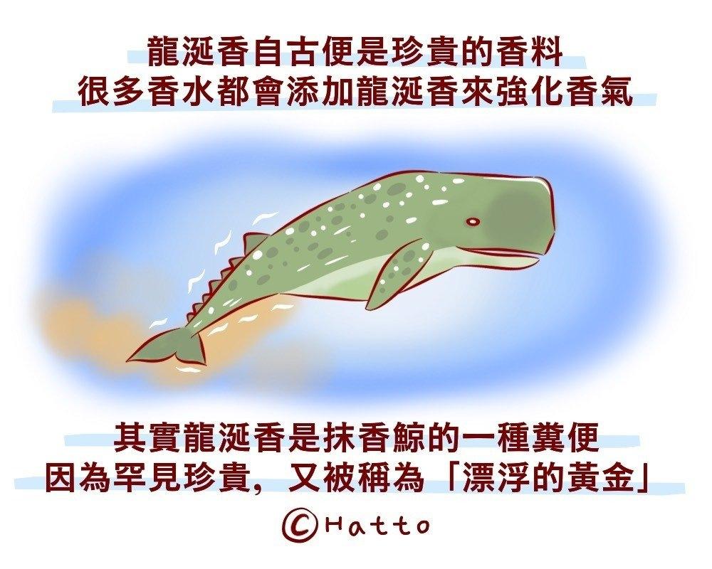 鳄鱼便便�o�蛋咨����F突然冒起可避孕
