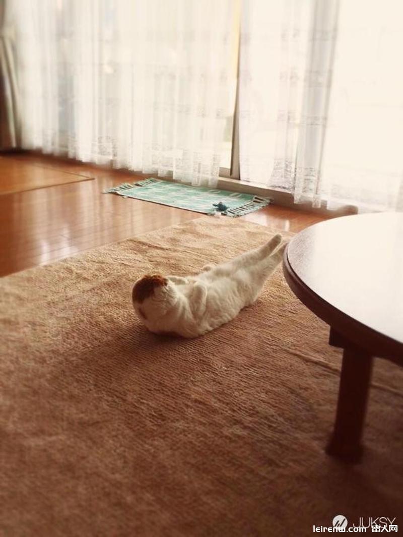 猫的仰卧☆起坐,原来喵�e星人会偷练腹肌?!