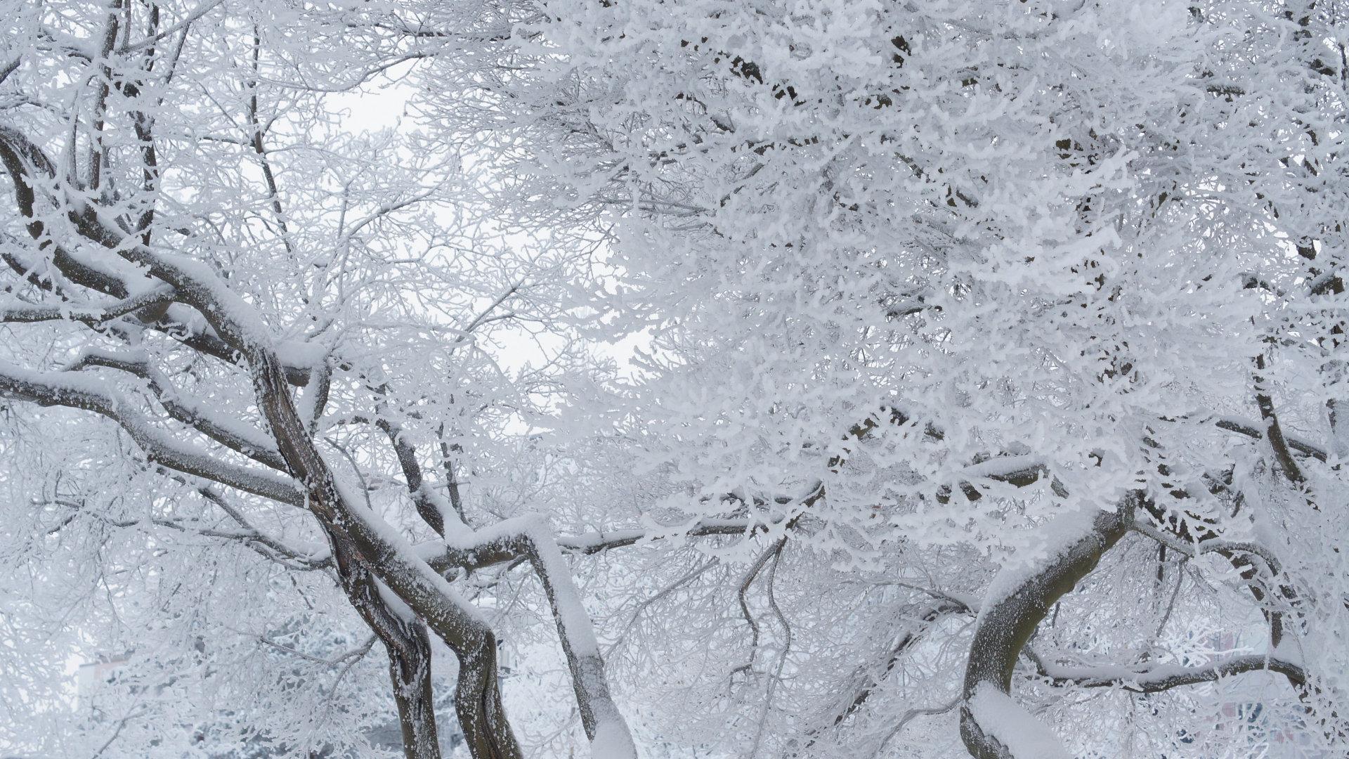 冬季雾凇奇观1080P高清壁纸图片