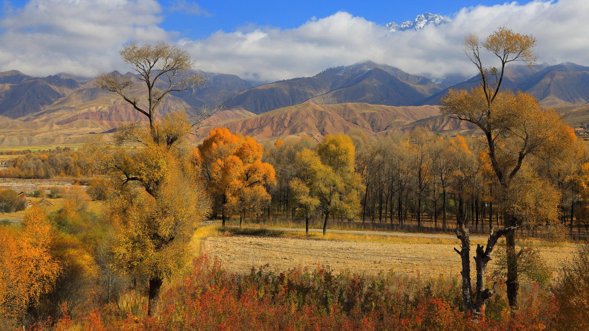 秋天的青海黑河大峡谷1080P高清图片素材