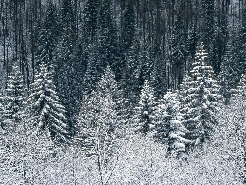 雪山雪景 第四辑4K高清图片素材