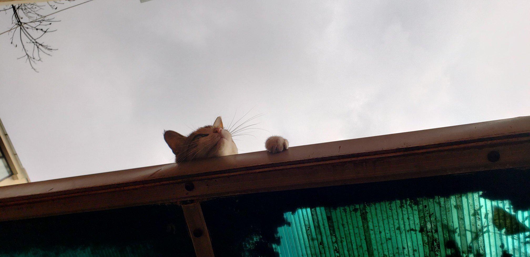 突然发现我还拍过猫片