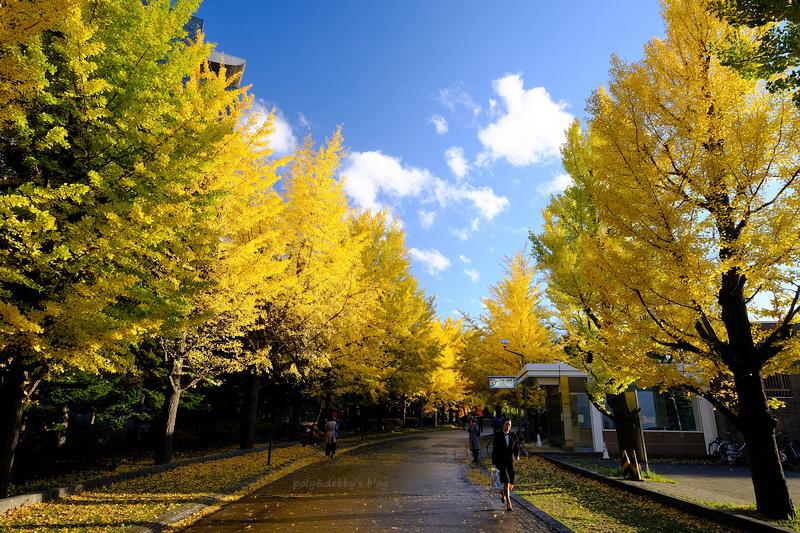 【札幌】中岛公园:秋天枫叶、冬天滑雪都好玩!好评Vessel Inn就在旁