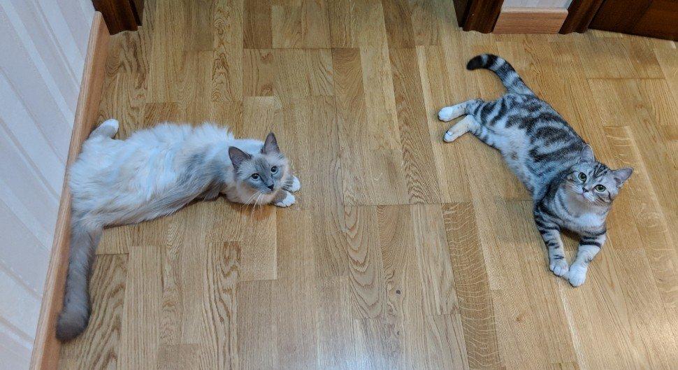 有没有好用的家用摄像头推荐啊 内有猫片