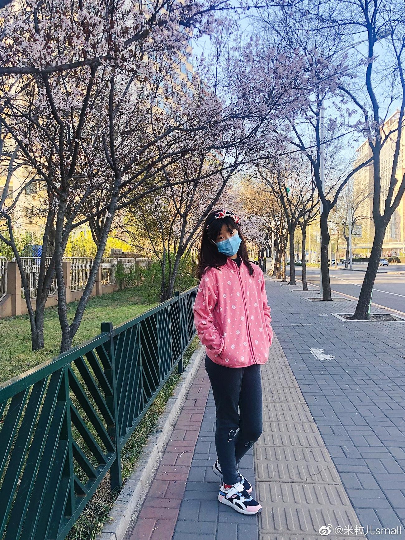 公主日记微冷的下午,很难想象这是樱花季的西三环