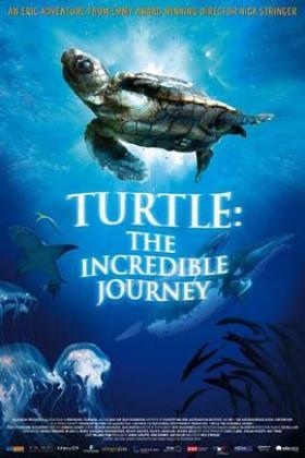 海龟奇妙之旅海报