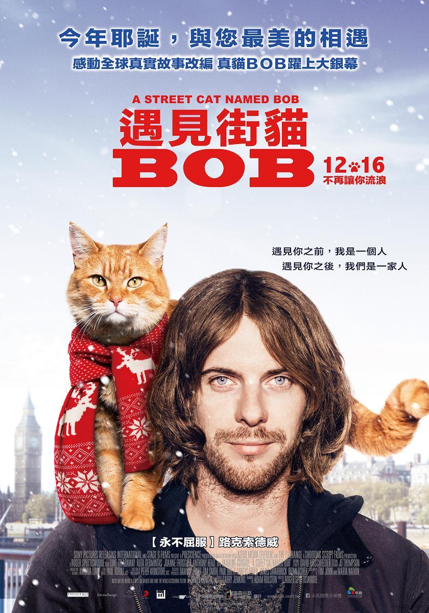 遇见街猫BOB