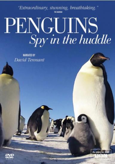 企鹅群里有特务