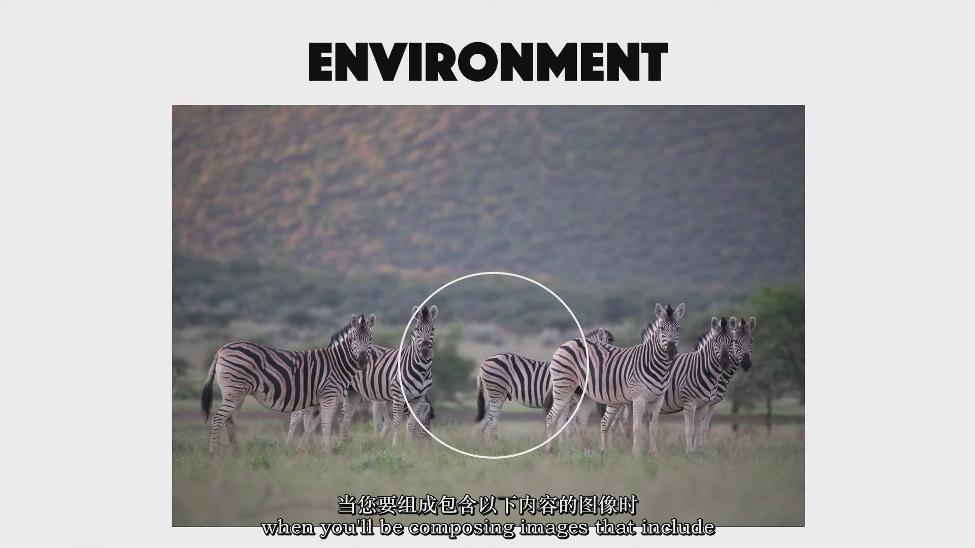 摄影教程_Chase Teron的终极野生动物摄影及后期套装教程附RAW素材-中英字幕 摄影教程 _预览图10