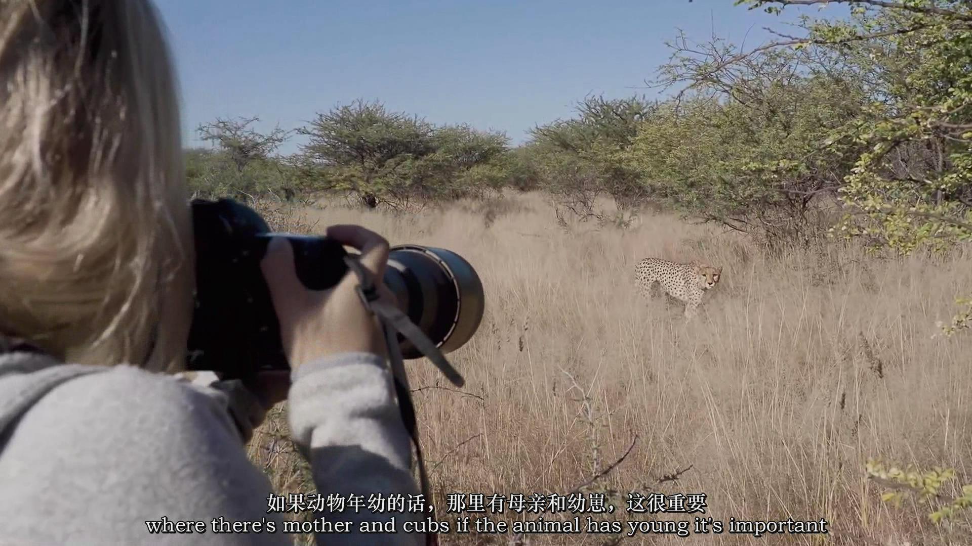 摄影教程_Chase Teron的终极野生动物摄影及后期套装教程附RAW素材-中英字幕 摄影教程 _预览图12