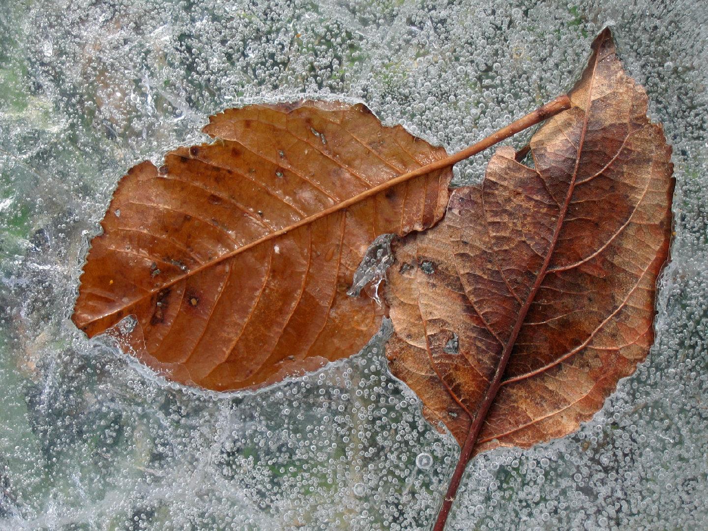 冰雪植物 第二辑1080P高清图片素材