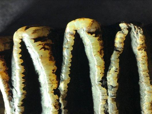 陕西汉中天坑群调查发现剑齿象化石