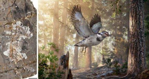 """中国科学家发现早期鸟类可随环境而""""变形"""""""