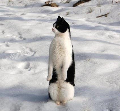 这孩子在南极呆了几天就一直说自己是企鹅!