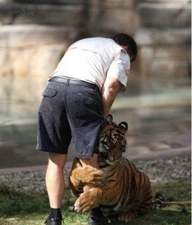 老虎也深情:别走~