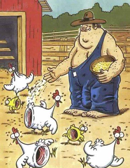 有个单身汉他喂了很多的鸡~