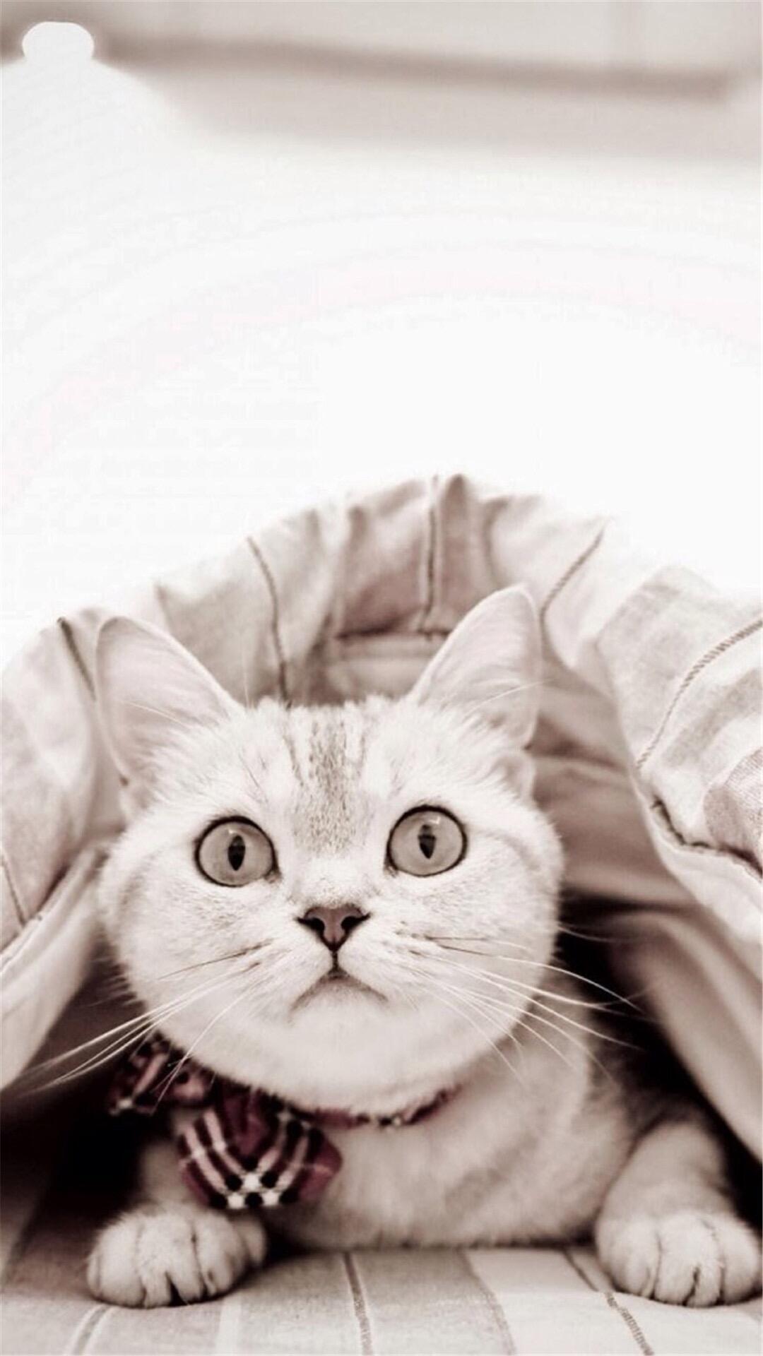 可爱的猫咪壁纸~希望您能够喜欢