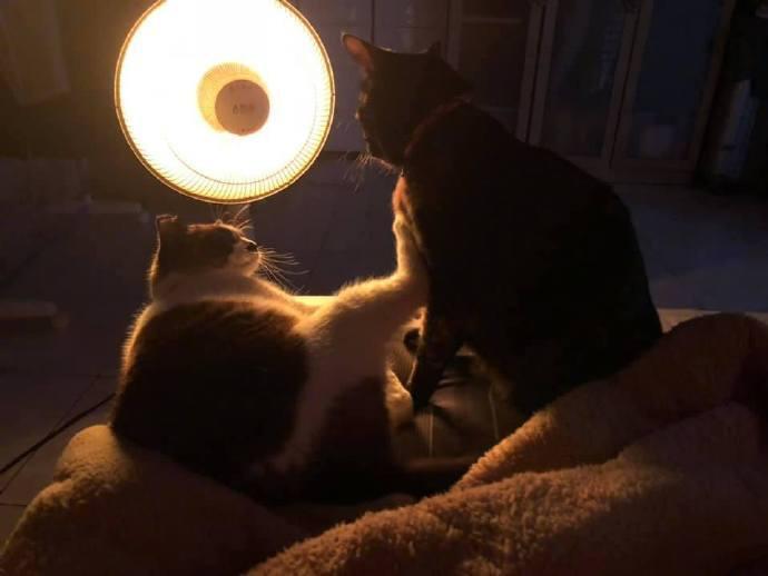 萌宠图片小太阳争夺战,猫一只脚就镇住了对方.......-萌宠