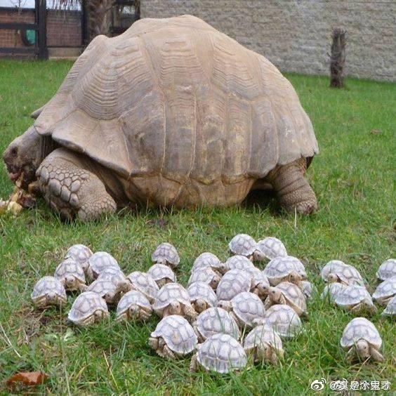 搞笑图片八十岁的乌龟和它的孩子们