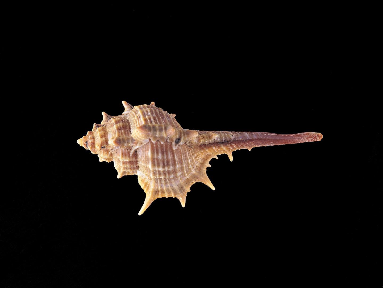 形态各异的海螺高清特写图集