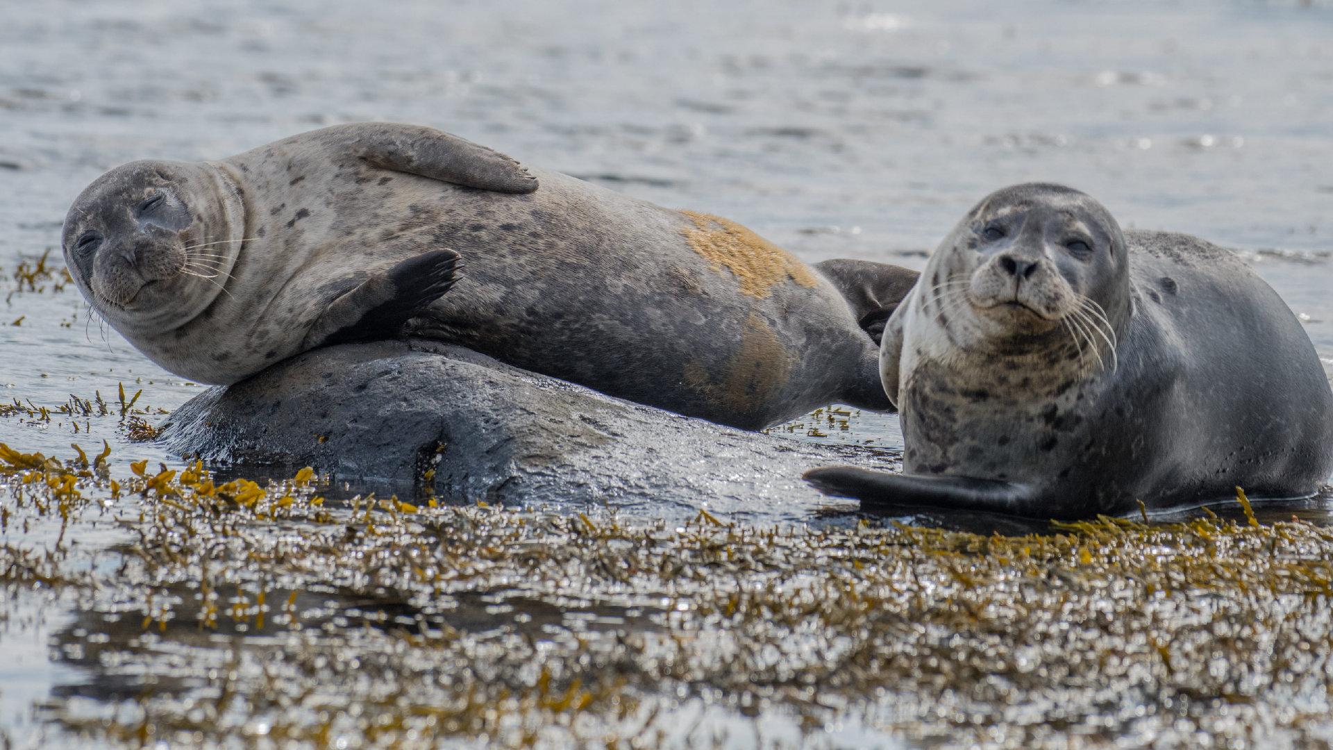 呆萌慵懒的海狮壁纸图集
