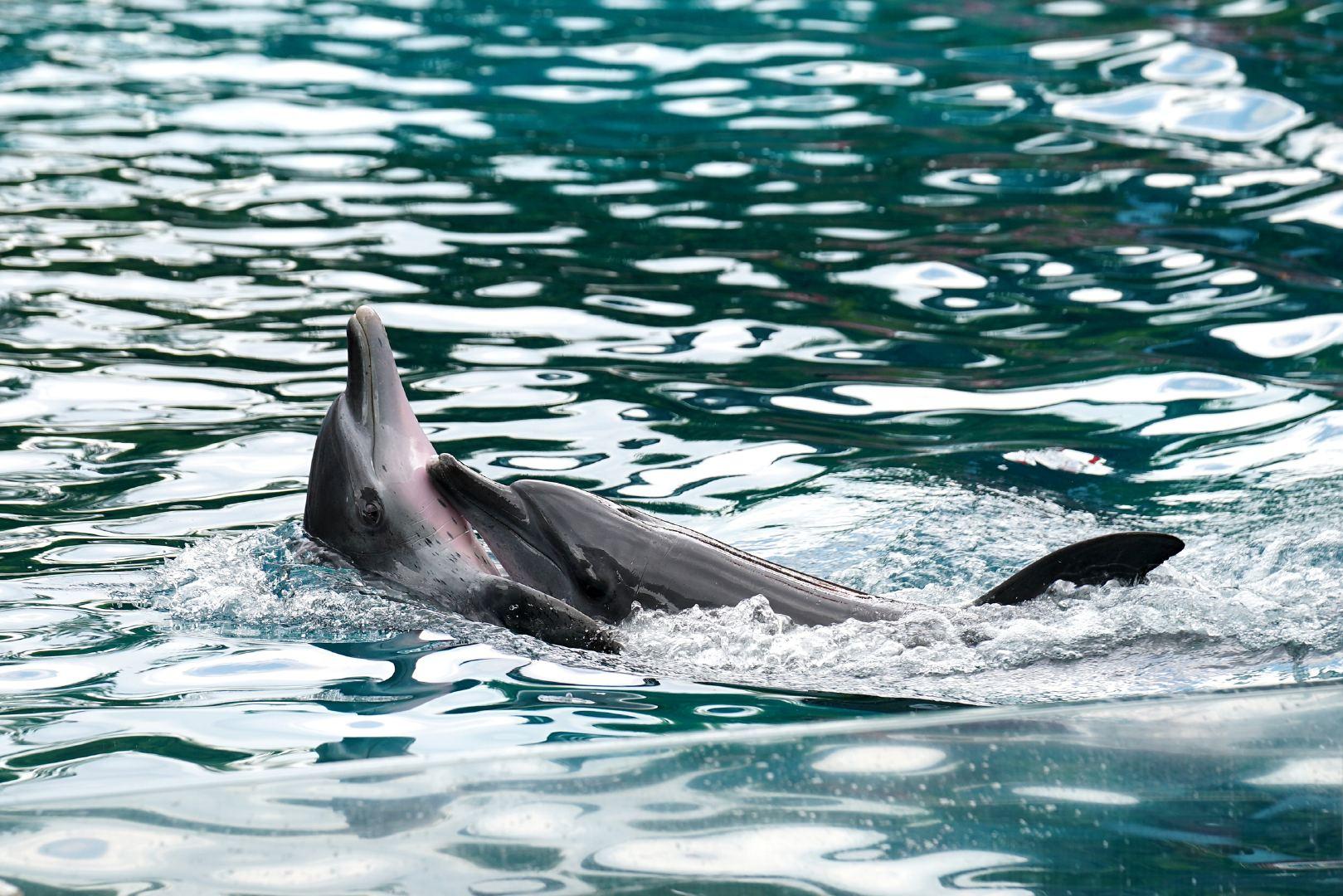 水族馆中畅游玩耍的可爱海豚超清壁纸
