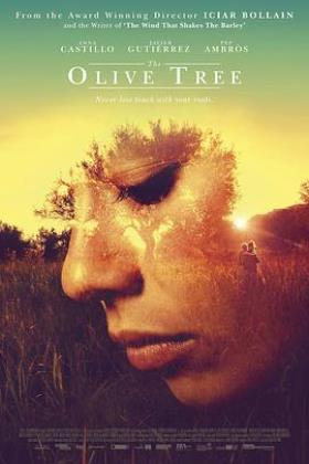 橄榄树海报
