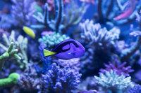 海洋中淡紫色的珊瑚高清摄影美图