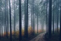 原始森林中高大笔直的树木高清桌面壁纸