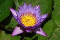 池塘里各种颜色睡莲的高清宽屏壁纸