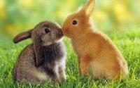 长着长耳朵的小兔子高清壁纸大全