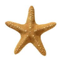 奇特又可爱的海星高清桌面壁纸